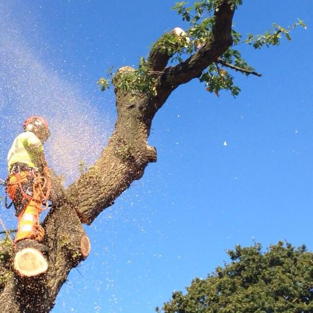 tree surgeons, birmingham, west bromwich, stourbridge, wolverhampton, dudley, tree services, tree removal